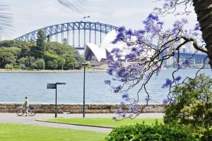 Opera House and Jacaranda