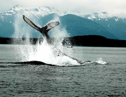 gi_83557_alaska-whale-watching-alt-header