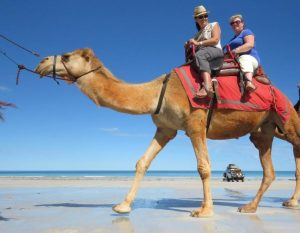 A view from up high! Personal travel managers (left) Nicole Edgar and Tania Patterson enjoying a camel ride in Broome