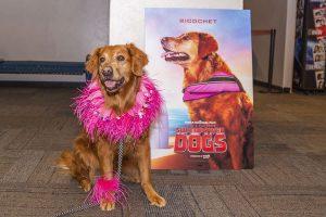Global Travel Media » Blog Archive » Surf Dog Ricochet Stars in Imax